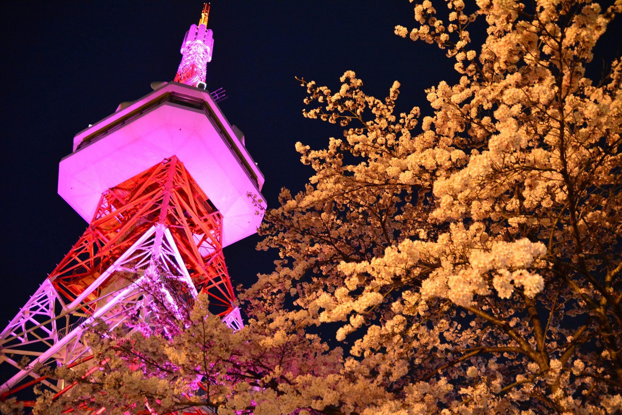 [宇都宮] 2020年 八幡山の花見、タワーや屋台等は営業中止 ライトアップも・・・