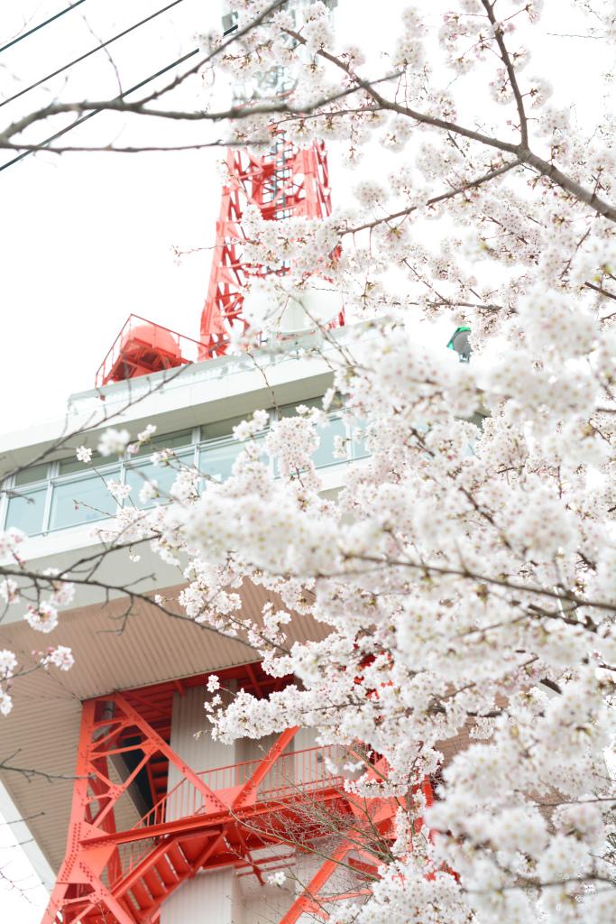 宇都宮タワー 八幡山公園
